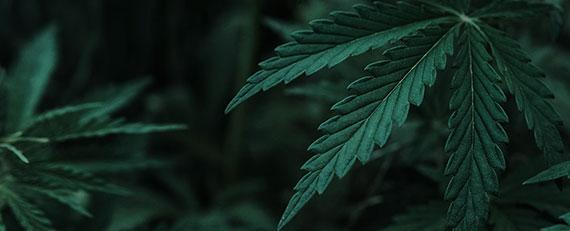 canada-cannabis-box247851d4d55c6034a03dff03008d3476